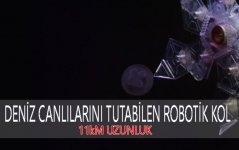 hassas organizma yakalayan robotik kol