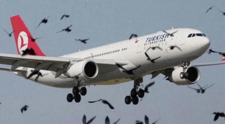 uçak motorlarına giren kuşların engellenmesi